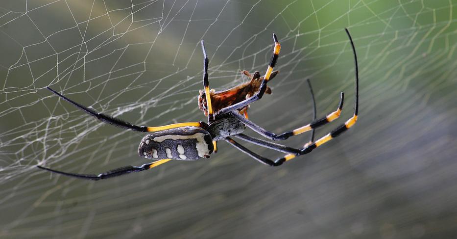 """Les araignées """"se donnent rendez-vous"""" dans nos maisons à 19 h 35 !"""